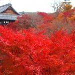 京都紅葉狩り2016年の見頃時期予想!おすすめ寺や有名所をご紹介!