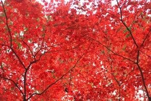鎌倉紅葉写真