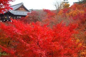 京都紅葉画像