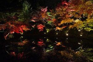 高台寺紅葉ライトアップ