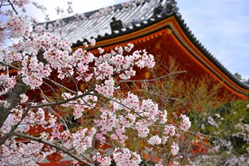 京都の名所の桜写真