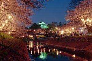 岡崎公園の夜桜ライトアップ