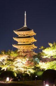 東寺の夜桜ライトアップの写真