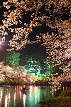 高田公園 夜桜1