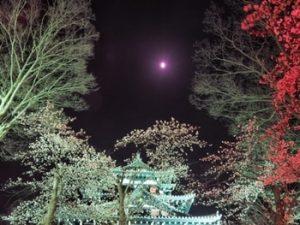 高田公園 夜桜2