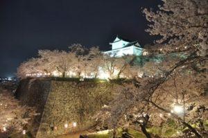 津山城鶴山公園の桜ライトアップ