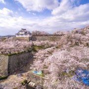 津山城鶴山公園の桜