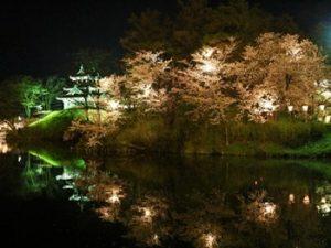 高田公園 夜桜3