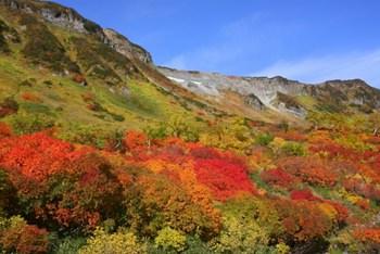 大雪山の紅葉画像
