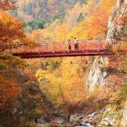 定山渓の紅葉の画像