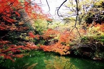 六義園 紅葉-画像