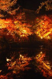 岩屋堂公園 紅葉ライトアップの画像