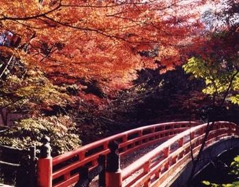 岩屋堂公園 紅葉の画像