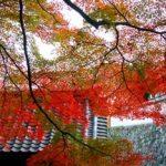 鎌倉の紅葉の見ごろ時期とおすすめコース!ランチやライトアップ情報まとめ!