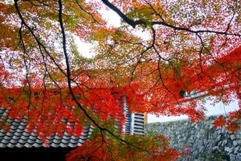 長谷寺の紅葉の写真