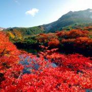 那須高原の紅葉の写真