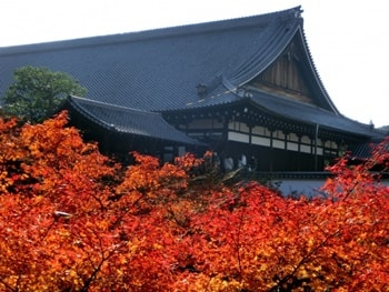 京都駅周辺の紅葉の穴場-画像
