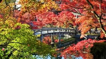 永観堂の紅葉の写真