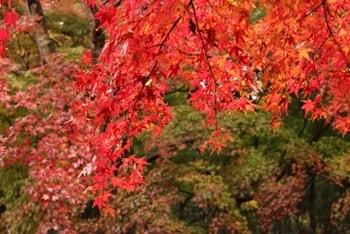 養老渓谷の紅葉-画像