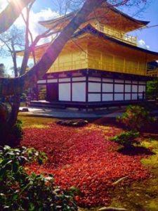 京都金閣寺の紅葉の画像