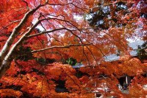 神護寺 紅葉の写真