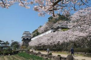 大村公園 桜-画像